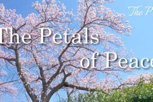 English subtitles:The Petals of Peace~平和の花びら(ザプレイズオリジナルソング)