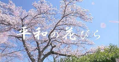 オリジナルソング『平和の花びら』ザプレイズ(ThePraise)-青空の中桜が舞う美しい写真